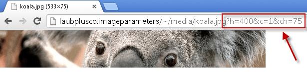 koalatimes75